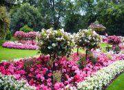 Парк роз