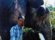 Погонщик и слон