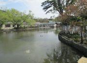 храм  Цуругаока Хатимангу